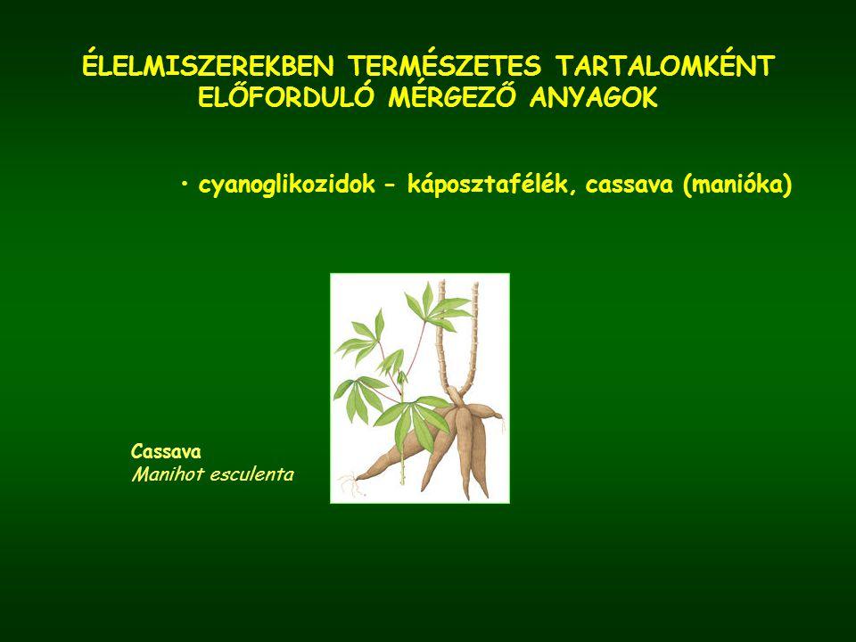 ÉLELMISZEREKBEN TERMÉSZETES TARTALOMKÉNT ELŐFORDULÓ MÉRGEZŐ ANYAGOK cyanoglikozidok - káposztafélék, cassava (manióka) Cassava Manihot esculenta