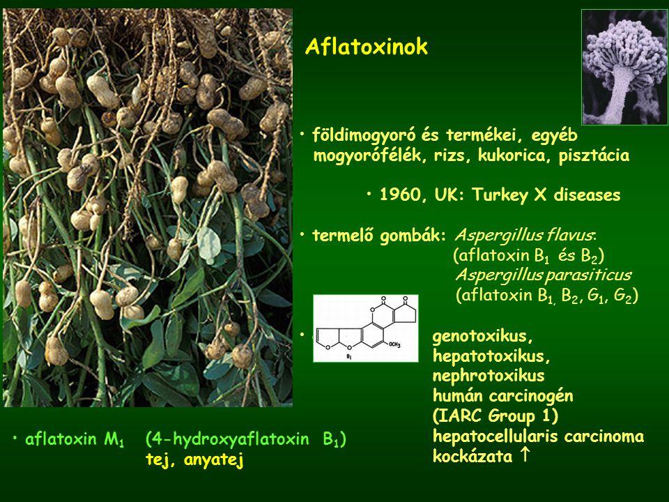 Aflatoxinok földimogyoró és termékei, egyéb mogyorófélék, rizs, kukorica, pisztácia 1960, UK: Turkey X diseases termelő gombák: Aspergillus flavus: (a
