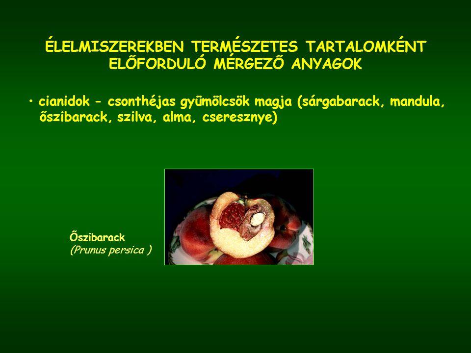 ÉLELMISZEREKBEN TERMÉSZETES TARTALOMKÉNT ELŐFORDULÓ MÉRGEZŐ ANYAGOK cianidok - csonthéjas gyümölcsök magja (sárgabarack, mandula, őszibarack, szilva,