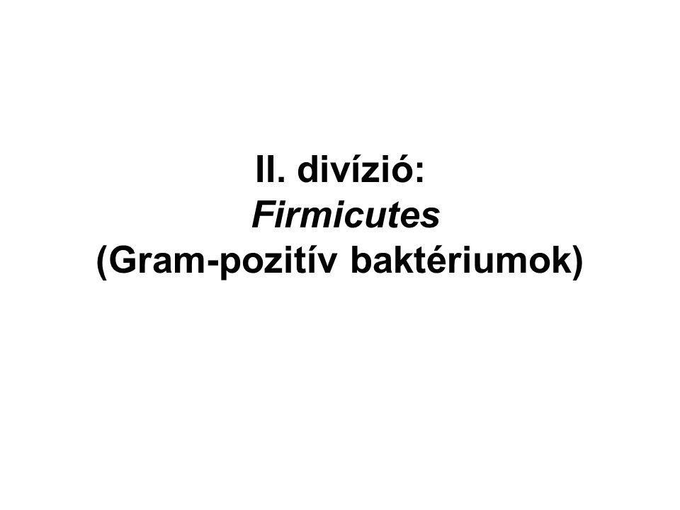 Ruminococcus