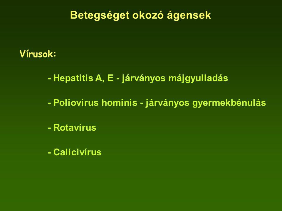 Betegséget okozó ágensek Vírusok: - Hepatitis A, E - járványos májgyulladás - Poliovirus hominis - járványos gyermekbénulás - Rotavírus - Calicivírus