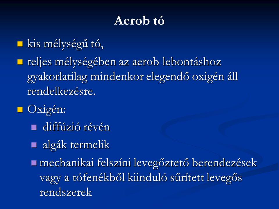 Aerob tó kis mélységű tó, kis mélységű tó, teljes mélységében az aerob lebontáshoz gyakorlatilag mindenkor elegendő oxigén áll rendelkezésre. teljes m