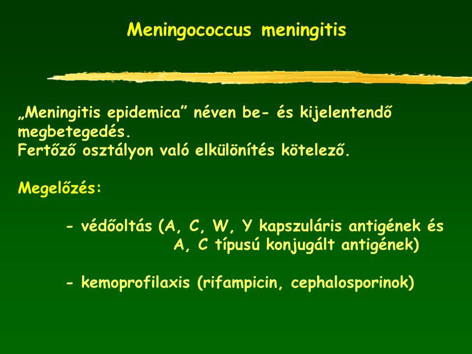 """Meningococcus meningitis """"Meningitis epidemica"""" néven be- és kijelentendő megbetegedés. Fertőző osztályon való elkülönítés kötelező. Megelőzés: - védő"""