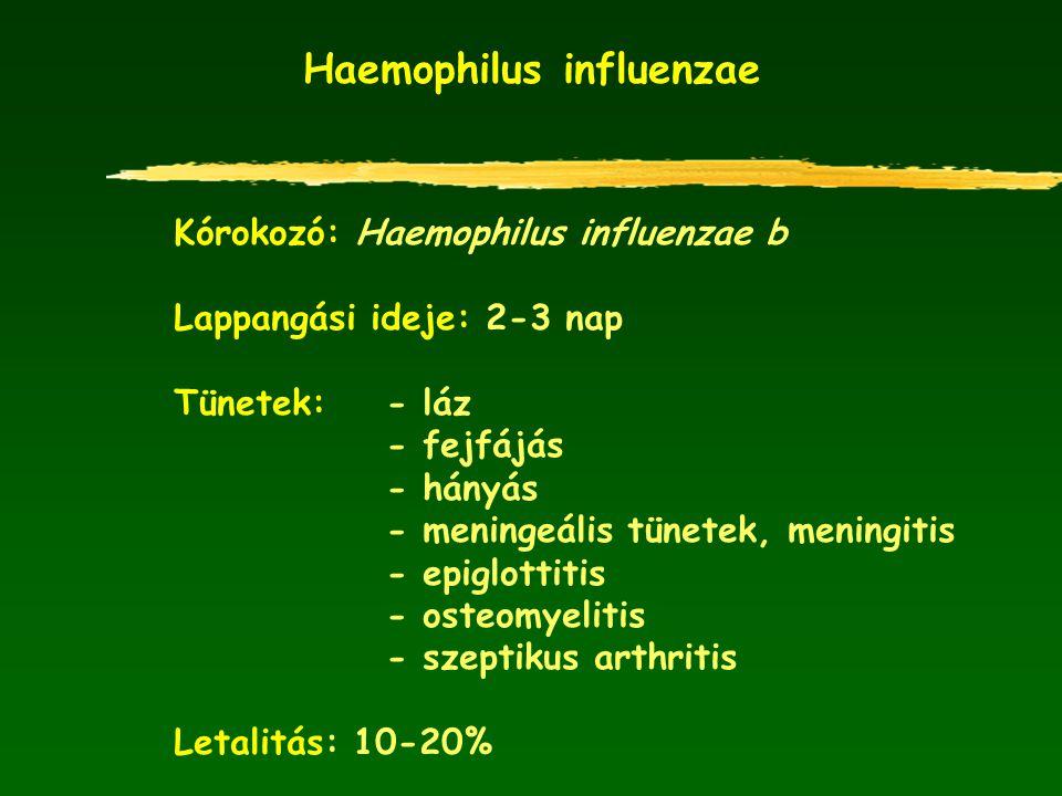 Haemophilus influenzae Kórokozó: Haemophilus influenzae b Lappangási ideje: 2-3 nap Tünetek: - láz - fejfájás - hányás - meningeális tünetek, meningit