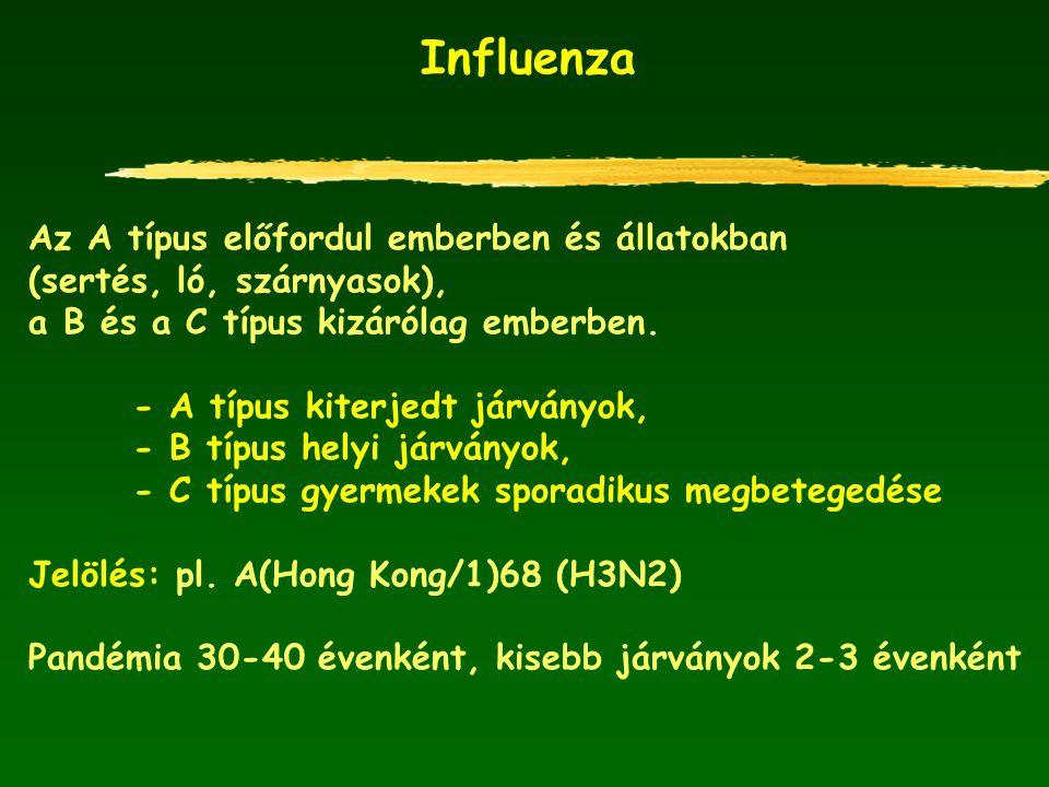 Influenza Az A típus előfordul emberben és állatokban (sertés, ló, szárnyasok), a B és a C típus kizárólag emberben. - A típus kiterjedt járványok, -