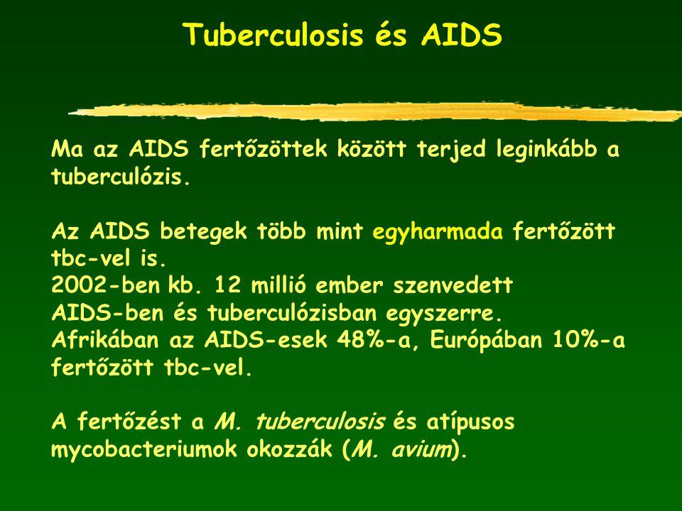 Tuberculosis és AIDS Ma az AIDS fertőzöttek között terjed leginkább a tuberculózis. Az AIDS betegek több mint egyharmada fertőzött tbc-vel is. 2002-be
