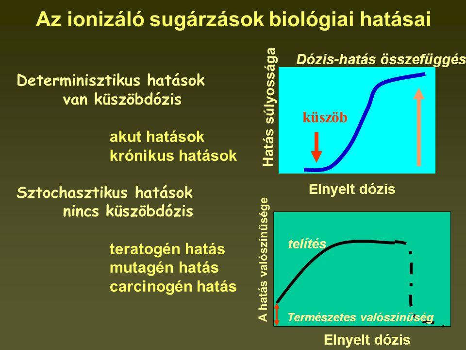 Az ionizáló sugárzások biológiai hatásai Determinisztikus hatások van küszöbdózis akut hatások krónikus hatások Sztochasztikus hatások nincs küszöbdózis teratogén hatás mutagén hatás carcinogén hatás Hatás súlyossága Elnyelt dózis küszöb Dózis-hatás összefüggés Természetes valószínűség telítés A hatás valószínűsége Elnyelt dózis