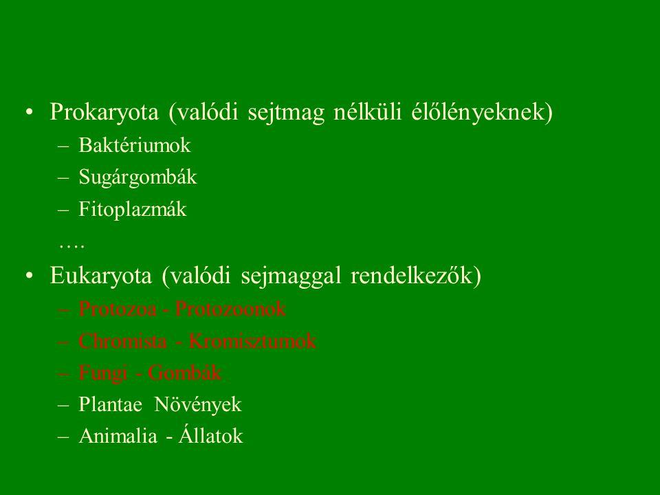 Prokaryota (valódi sejtmag nélküli élőlényeknek) –Baktériumok –Sugárgombák –Fitoplazmák …. Eukaryota (valódi sejmaggal rendelkezők) –Protozoa - Protoz