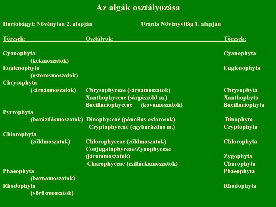Az algák osztályozása Hortobágyi: Növénytan 2. alapján Uránia Növényvilág 1. alapján Törzsek:Osztályok:Törzsek:Cyanophyta (kékmoszatok)Euglenophyta (o