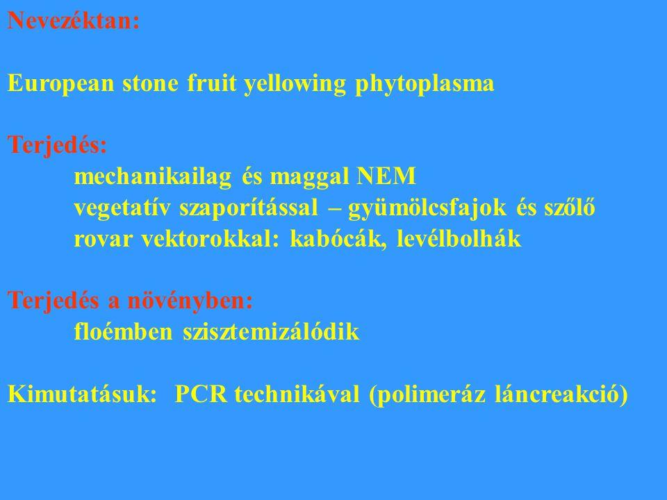 Nevezéktan: European stone fruit yellowing phytoplasma Terjedés: mechanikailag és maggal NEM vegetatív szaporítással – gyümölcsfajok és szőlő rovar ve