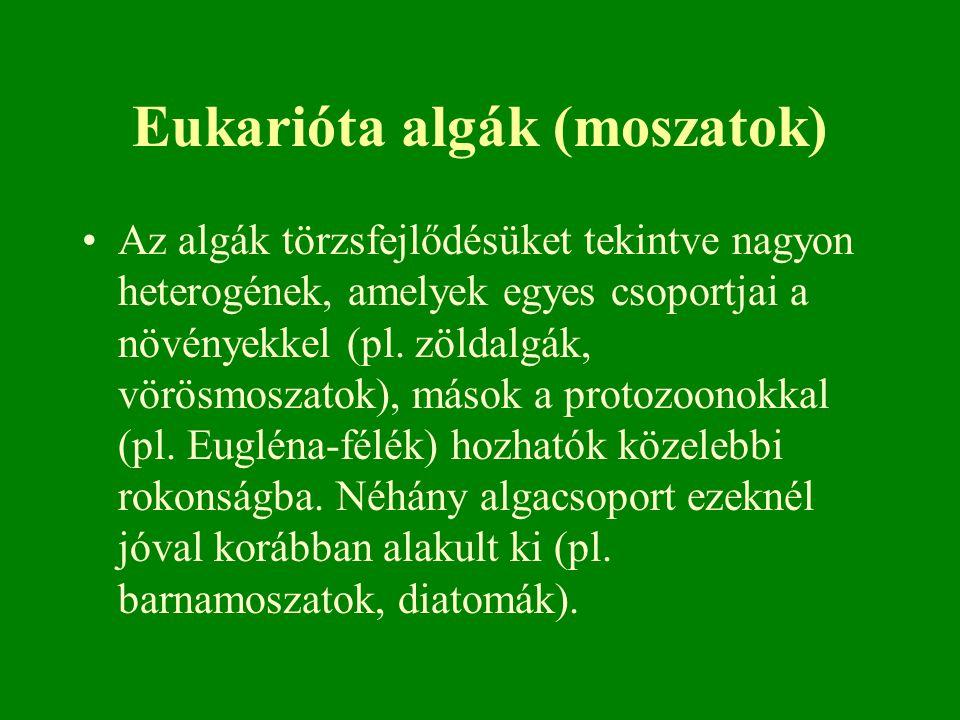 Eukarióta algák (moszatok) Az algák törzsfejlődésüket tekintve nagyon heterogének, amelyek egyes csoportjai a növényekkel (pl. zöldalgák, vörösmoszato