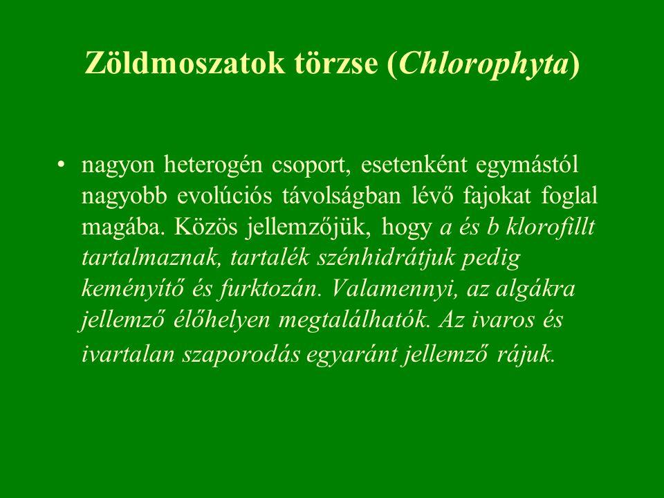 Zöldmoszatok törzse (Chlorophyta) nagyon heterogén csoport, esetenként egymástól nagyobb evolúciós távolságban lévő fajokat foglal magába. Közös jelle