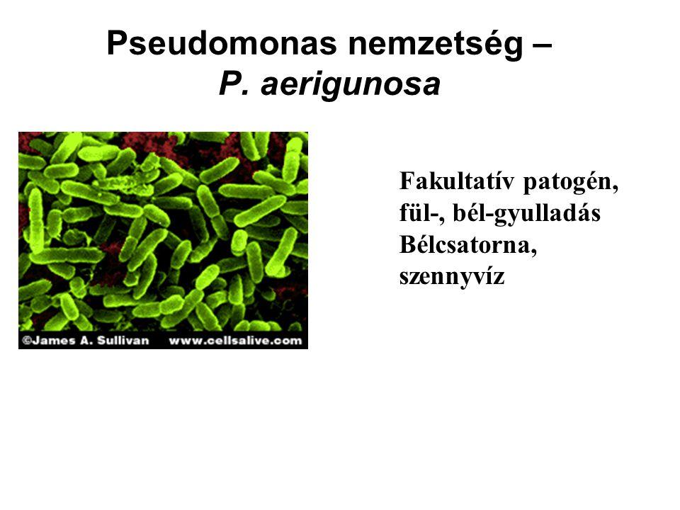 Pseudomonas nemzetség – P. aerigunosa Fakultatív patogén, fül-, bél-gyulladás Bélcsatorna, szennyvíz