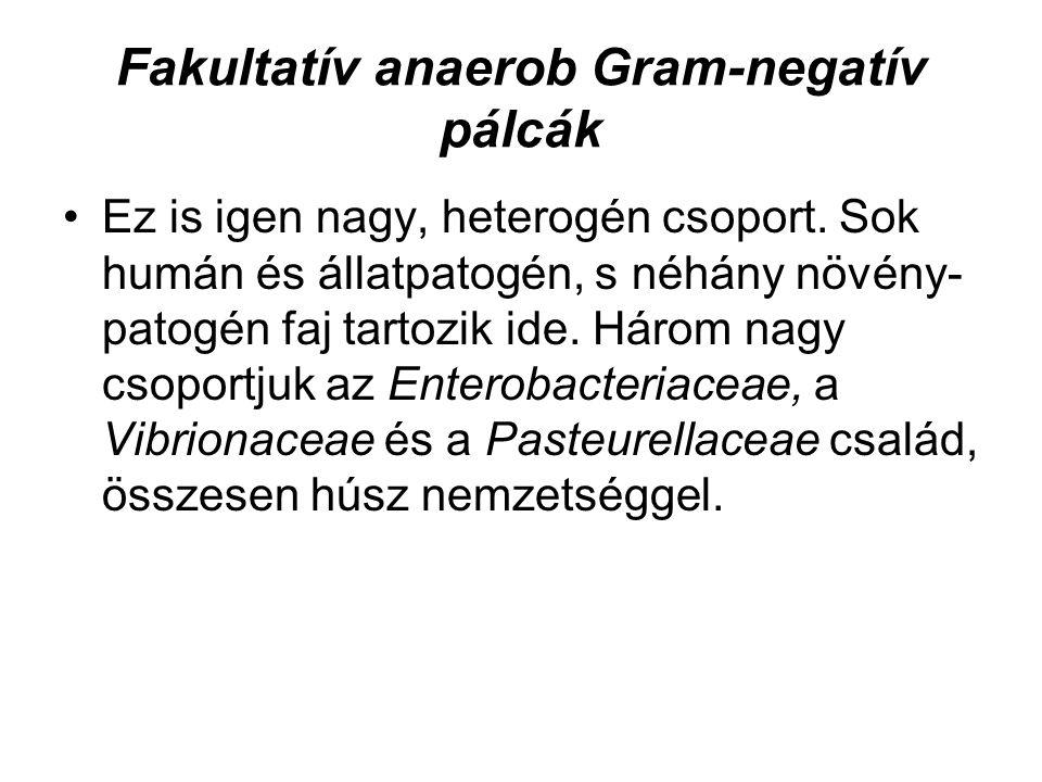 Fakultatív anaerob Gram-negatív pálcák Ez is igen nagy, heterogén csoport. Sok humán és állatpatogén, s néhány növény- patogén faj tartozik ide. Három