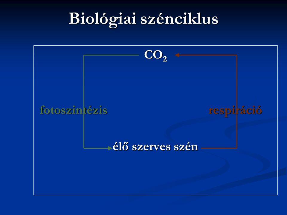 Biológiai szénciklus CO 2 fotoszintézisrespiráció fotoszintézisrespiráció élő szerves szén