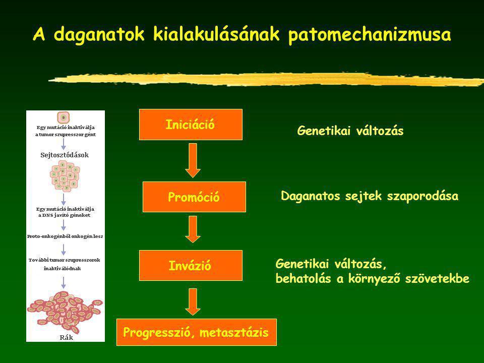 A daganatok kialakulásának patomechanizmusa Genetikai változás Iniciáció Promóció Invázió Progresszió, metasztázis Daganatos sejtek szaporodása Genetikai változás, behatolás a környező szövetekbe