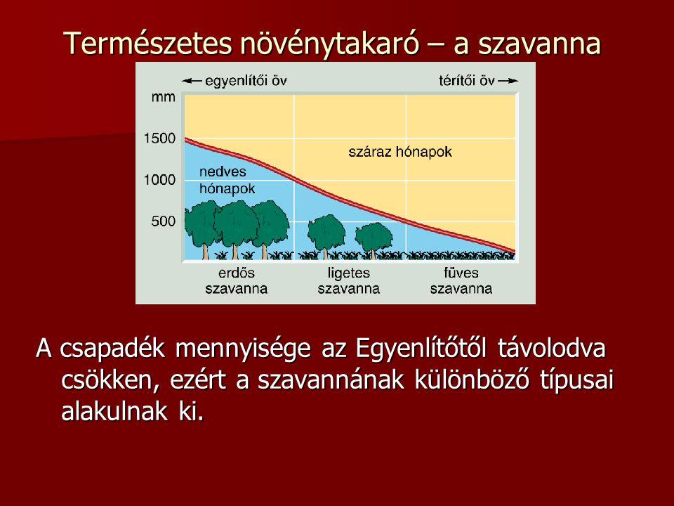 Természetes növénytakaró – a szavanna A csapadék mennyisége az Egyenlítőtől távolodva csökken, ezért a szavannának különböző típusai alakulnak ki.