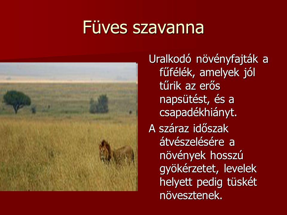 Füves szavanna Uralkodó növényfajták a fűfélék, amelyek jól tűrik az erős napsütést, és a csapadékhiányt. A száraz időszak átvészelésére a növények ho