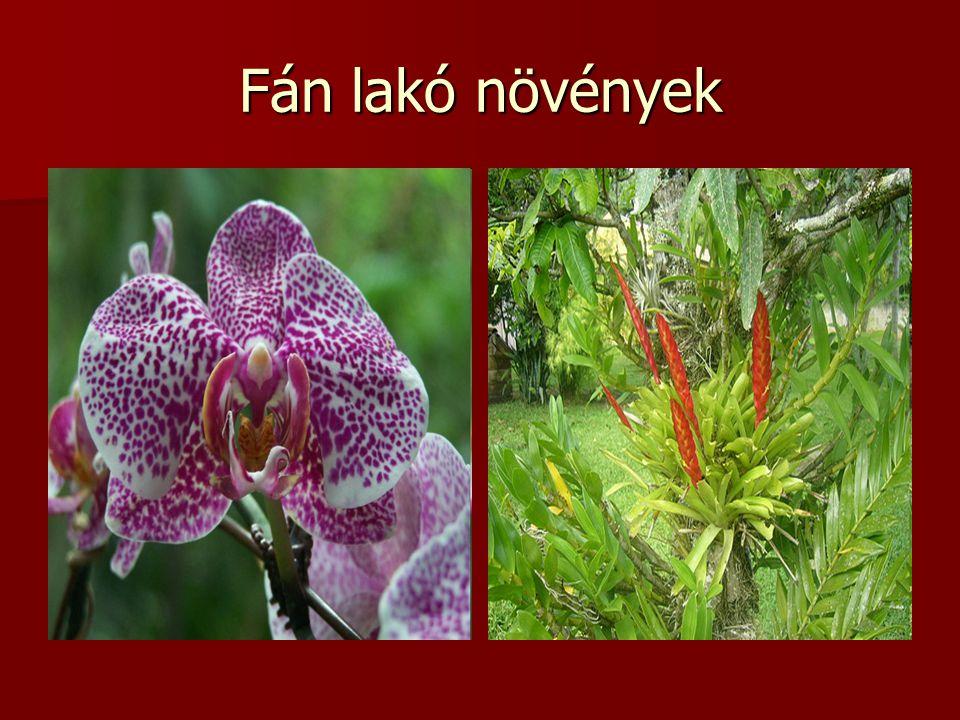 Fán lakó növények