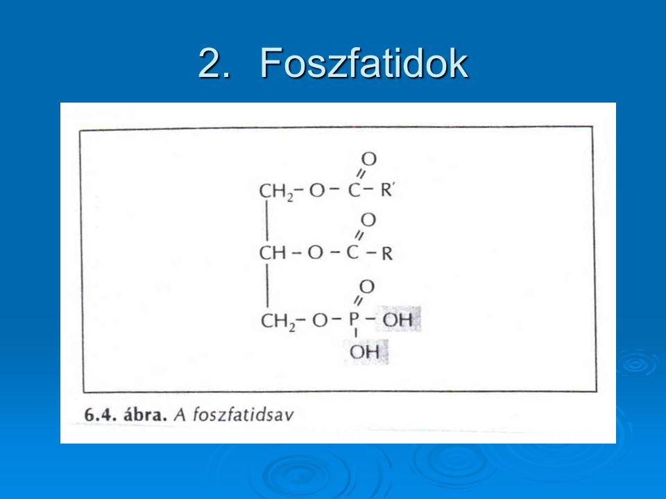 2.Foszfatidok