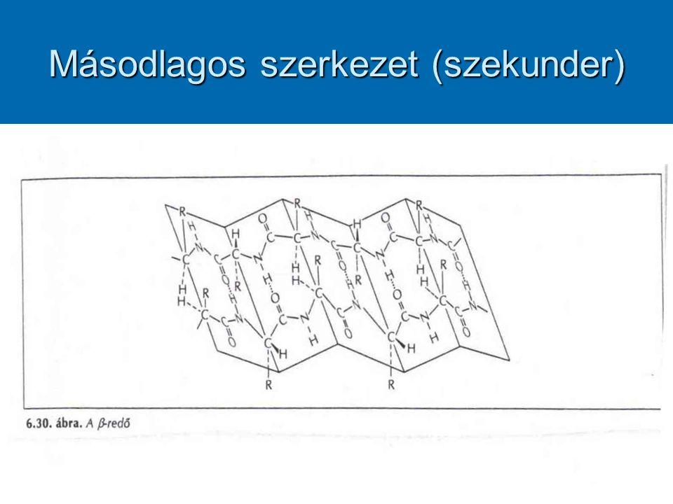 Másodlagos szerkezet (szekunder)