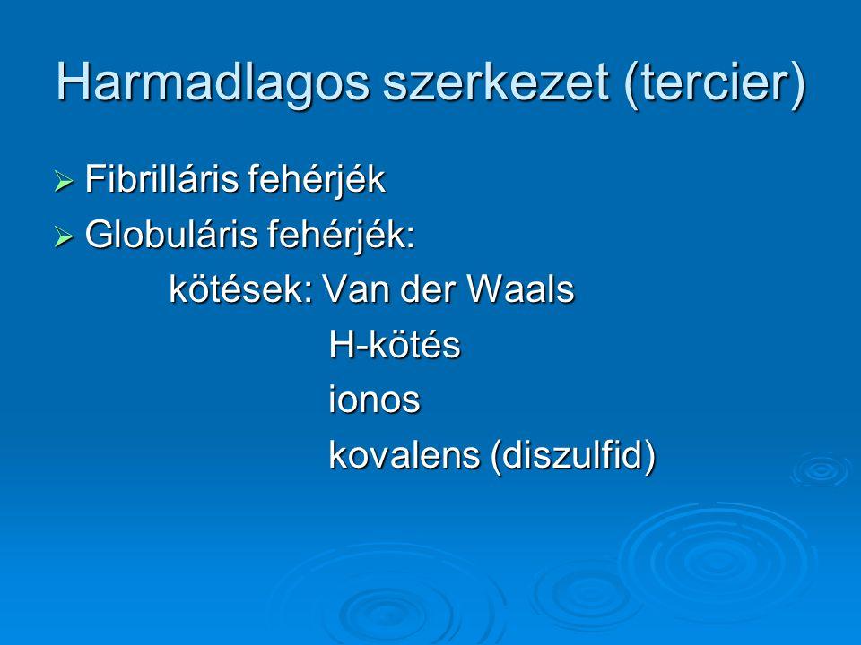 Harmadlagos szerkezet (tercier)  Fibrilláris fehérjék  Globuláris fehérjék: kötések: Van der Waals kötések: Van der Waals H-kötés H-kötés ionos iono