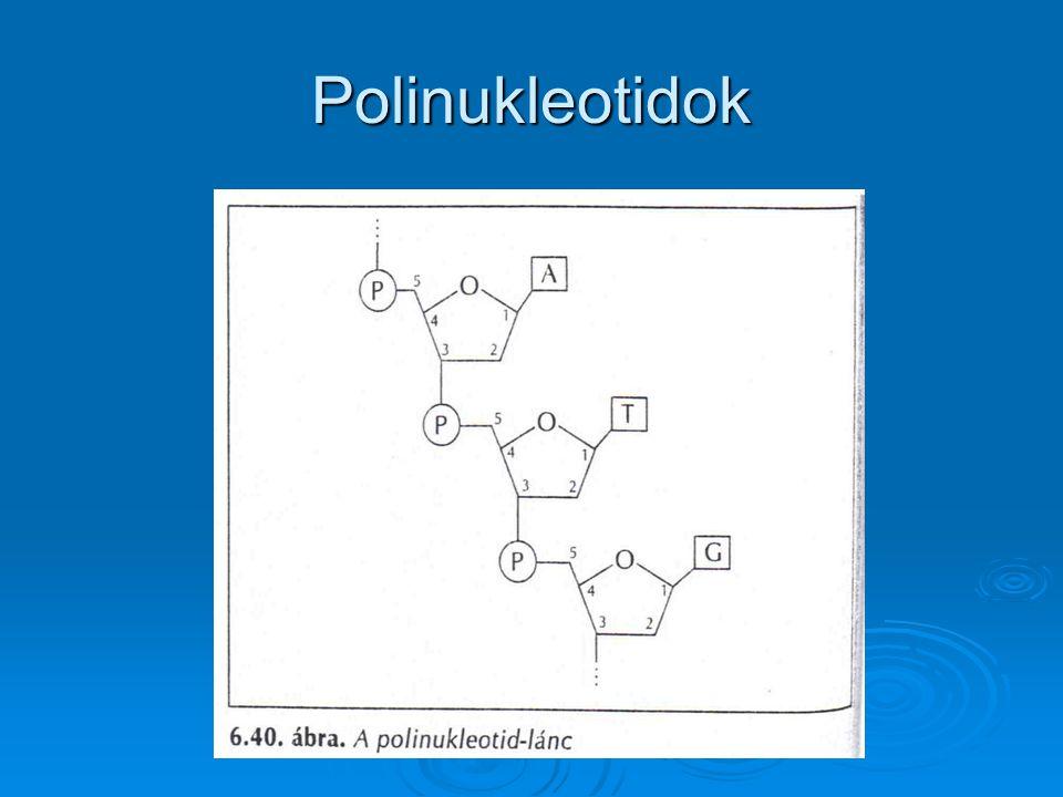 Polinukleotidok