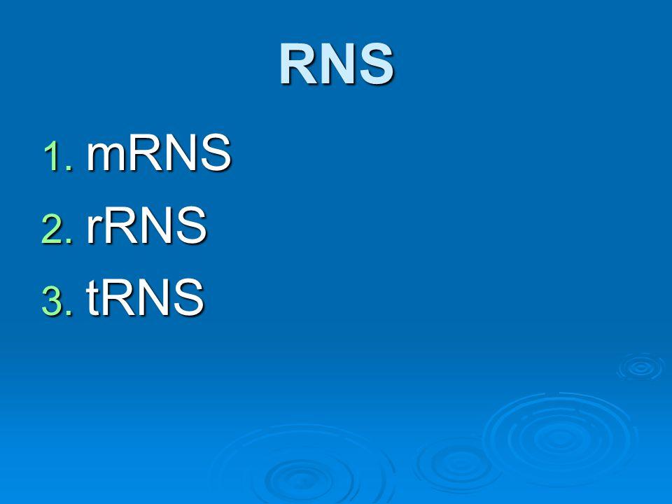 RNS 1. mRNS 2. rRNS 3. tRNS