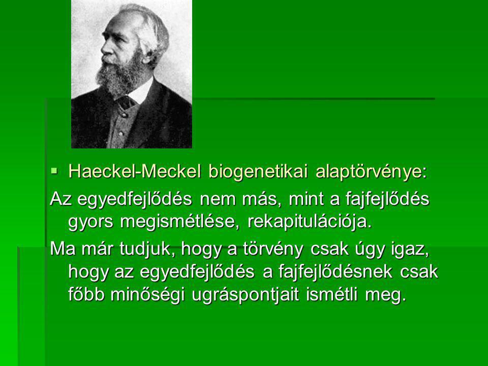  Haeckel-Meckel biogenetikai alaptörvénye: Az egyedfejlődés nem más, mint a fajfejlődés gyors megismétlése, rekapitulációja. Ma már tudjuk, hogy a tö