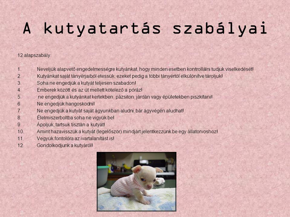 A kutyatartás szabályai 12 alapszabály: 1.Neveljük alapvető engedelmességre kutyánkat, hogy minden esetben kontrollálni tudjuk viselkedését! 2.Kutyánk