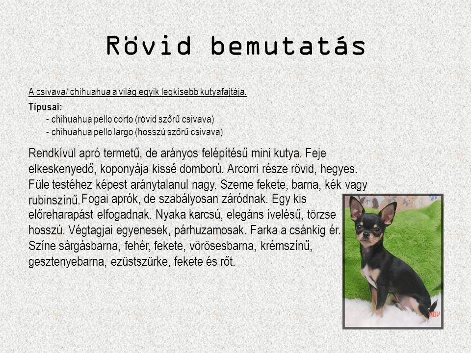 Rövid bemutatás A csivava/ chihuahua a világ egyik legkisebb kutyafajtája. Típusai: - chihuahua pello corto (rövid szőrű csivava) - chihuahua pello la