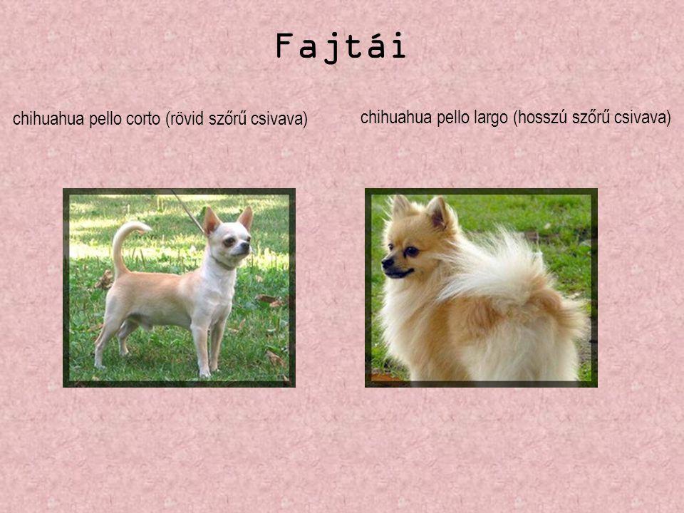chihuahua pello corto (rövid szőrű csivava) chihuahua pello largo (hosszú szőrű csivava) Fajtái