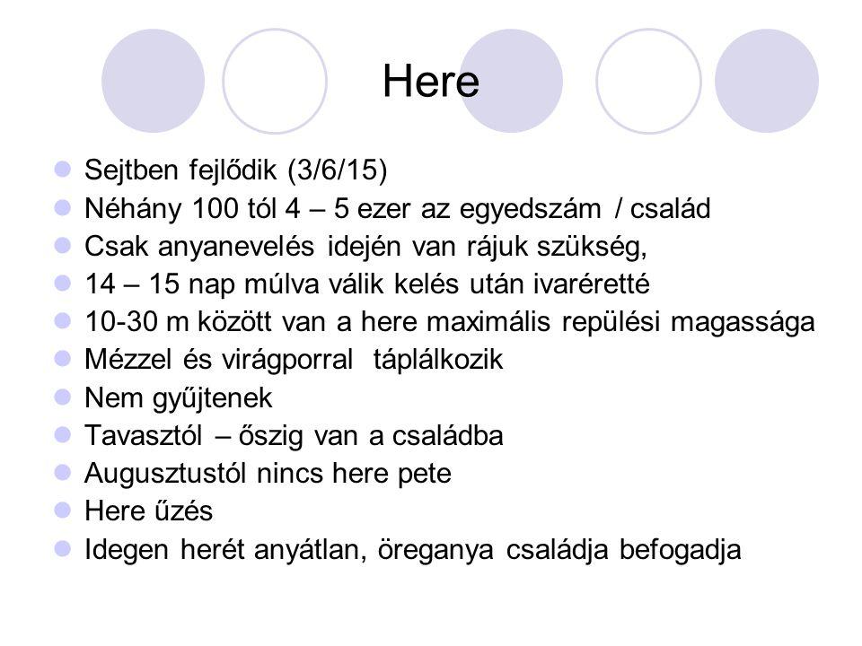 Here Sejtben fejlődik (3/6/15) Néhány 100 tól 4 – 5 ezer az egyedszám / család Csak anyanevelés idején van rájuk szükség, 14 – 15 nap múlva válik kelé