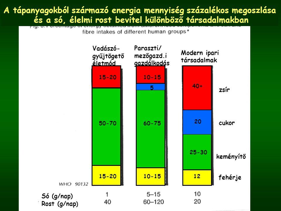 Só (g/nap) Rost (g/nap ) Vadászó- gyűjtögető életmód Paraszti/ mezőgazd.i gazdálkodás Modern ipari társadalmak zsír cukor keményítő fehérje 15-20 50-70 15-20 10-15 60-75 10-15 40+ 25-30 12 20 A tápanyagokból származó energia mennyiség százalékos megoszlása és a só, élelmi rost bevitel különböző társadalmakban 5