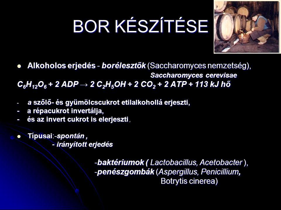 BOR KÉSZÍTÉSE Alkoholos erjedés - borélesztők (Saccharomyces nemzetség), Alkoholos erjedés - borélesztők (Saccharomyces nemzetség), Saccharomyces cere