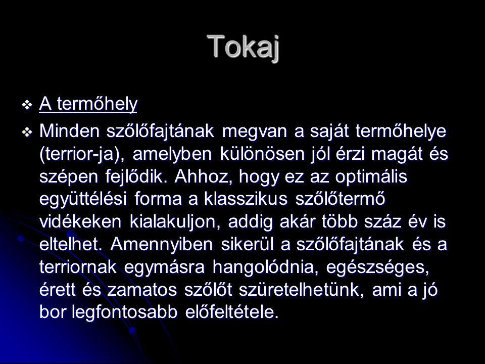 Tokaj  A termőhely  Minden szőlőfajtának megvan a saját termőhelye (terrior-ja), amelyben különösen jól érzi magát és szépen fejlődik. Ahhoz, hogy e