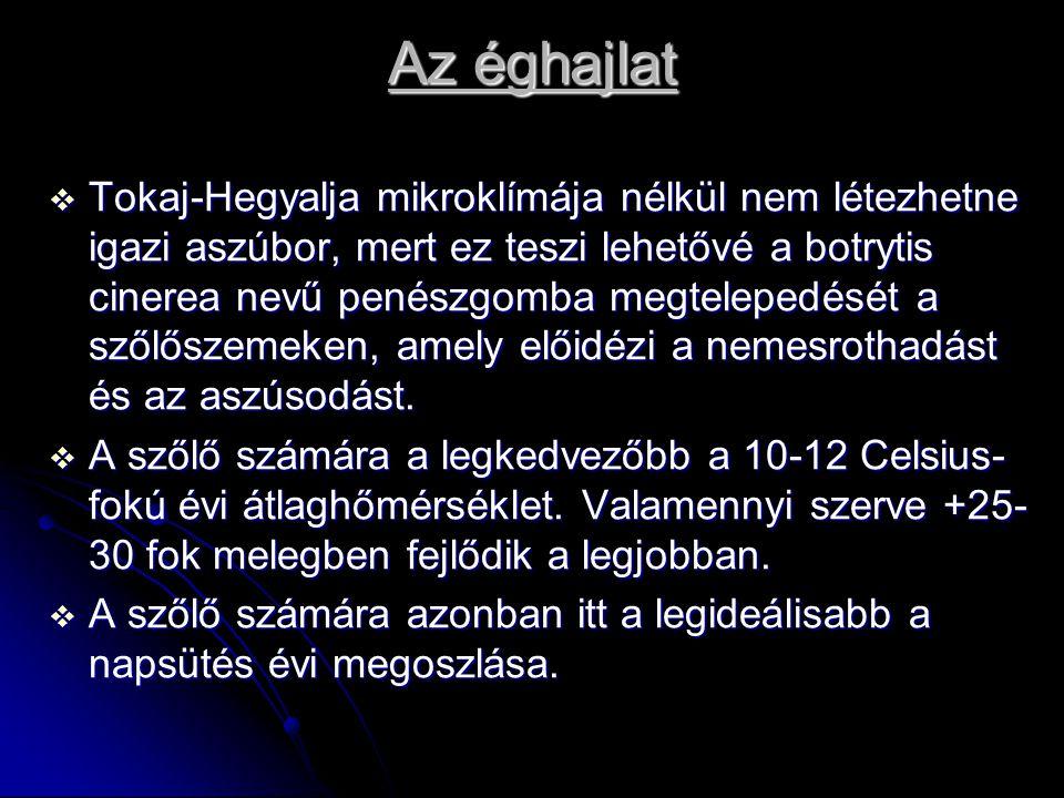 Az éghajlat  Tokaj-Hegyalja mikroklímája nélkül nem létezhetne igazi aszúbor, mert ez teszi lehetővé a botrytis cinerea nevű penészgomba megtelepedés
