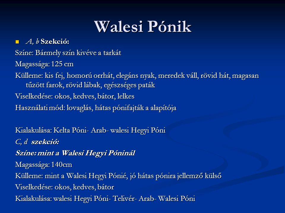 Walesi Pónik A, b Szekció: A, b Szekció: Színe: Bármely szín kivéve a tarkát Magassága: 125 cm Külleme: kis fej, homorú orrhát, elegáns nyak, meredek váll, rövid hát, magasan tűzött farok, rövid lábak, egészséges paták Viselkedése: okos, kedves, bátor, lelkes Használati mód: lovaglás, hátas pónifajták a alapítója Kialakulása: Kelta Póni- Arab- walesi Hegyi Póni C, d szekció: Színe: mint a Walesi Hegyi Póninál Magassága: 140cm Külleme: mint a Walesi Hegyi Pónié, jó hátas pónira jellemző külső Viselkedése: okos, kedves, bátor Kialakulása: walesi Hegyi Póni- Telivér- Arab- Walesi Póni