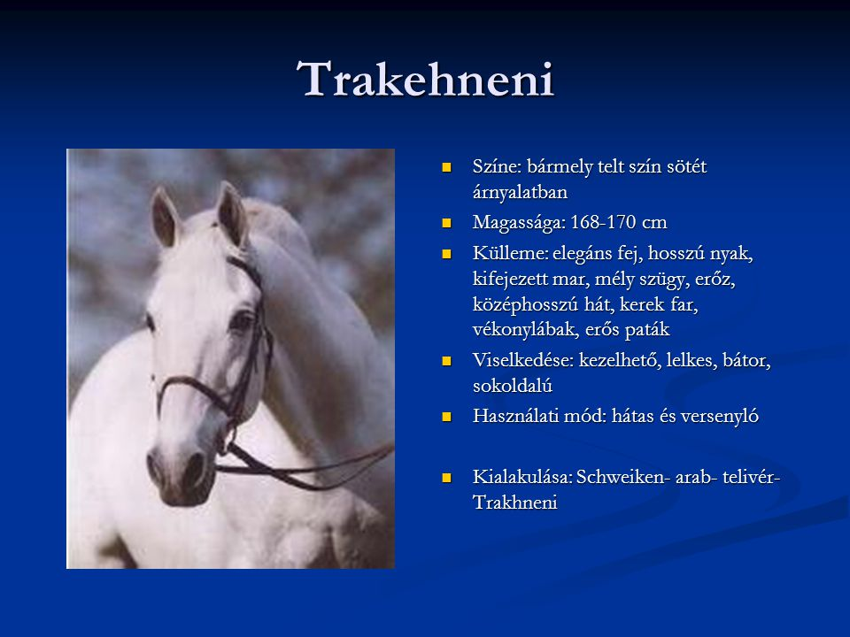 Trakehneni Színe: bármely telt szín sötét árnyalatban Magassága: 168-170 cm Külleme: elegáns fej, hosszú nyak, kifejezett mar, mély szügy, erőz, középhosszú hát, kerek far, vékonylábak, erős paták Viselkedése: kezelhető, lelkes, bátor, sokoldalú Használati mód: hátas és versenyló Kialakulása: Schweiken- arab- telivér- Trakhneni