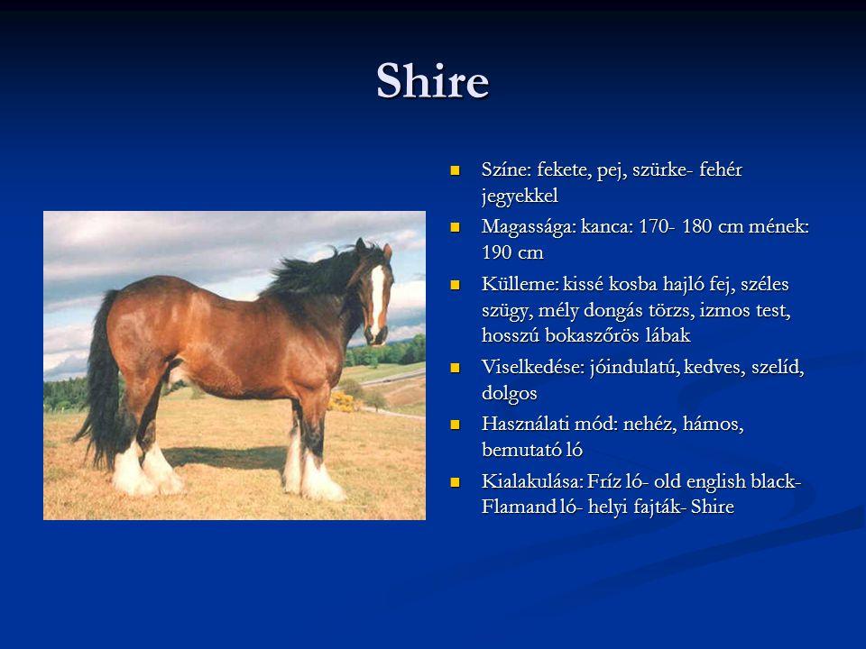Shire Színe: fekete, pej, szürke- fehér jegyekkel Magassága: kanca: 170- 180 cm mének: 190 cm Külleme: kissé kosba hajló fej, széles szügy, mély dongás törzs, izmos test, hosszú bokaszőrös lábak Viselkedése: jóindulatú, kedves, szelíd, dolgos Használati mód: nehéz, hámos, bemutató ló Kialakulása: Fríz ló- old english black- Flamand ló- helyi fajták- Shire