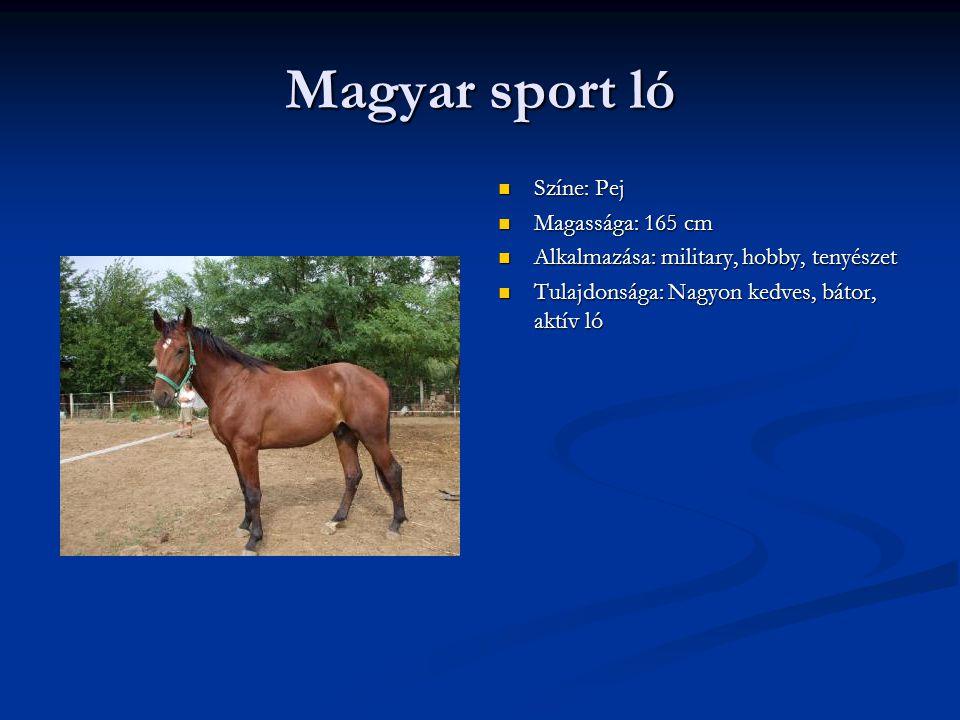 Magyar sport ló Színe: Pej Magassága: 165 cm Alkalmazása: military, hobby, tenyészet Tulajdonsága: Nagyon kedves, bátor, aktív ló