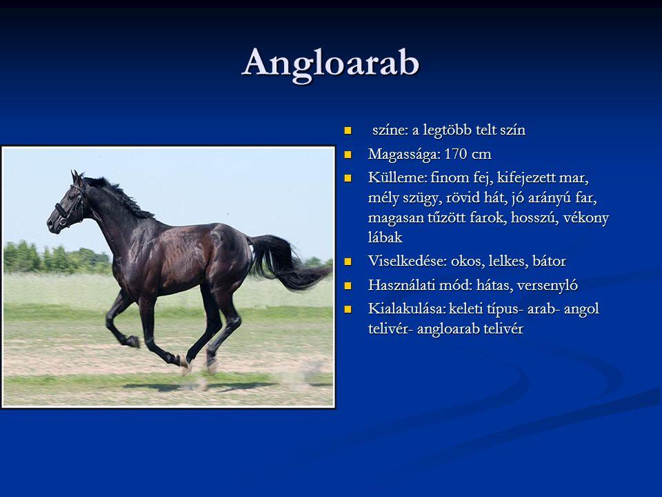 Angloarab színe: a legtöbb telt szín Magassága: 170 cm Külleme: finom fej, kifejezett mar, mély szügy, rövid hát, jó arányú far, magasan tűzött farok, hosszú, vékony lábak Viselkedése: okos, lelkes, bátor Használati mód: hátas, versenyló Kialakulása: keleti típus- arab- angol telivér- angloarab telivér