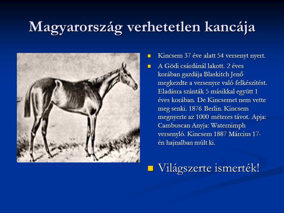 Magyarország verhetetlen kancája Kincsem 37 éve alatt 54 versenyt nyert.