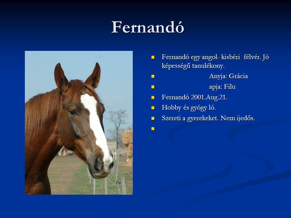 Fernandó Fernandó Fernandó egy angol- kisbéri félvér.