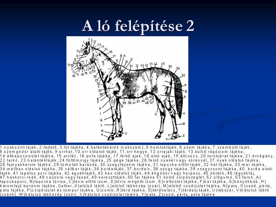 A ló felépítése 2