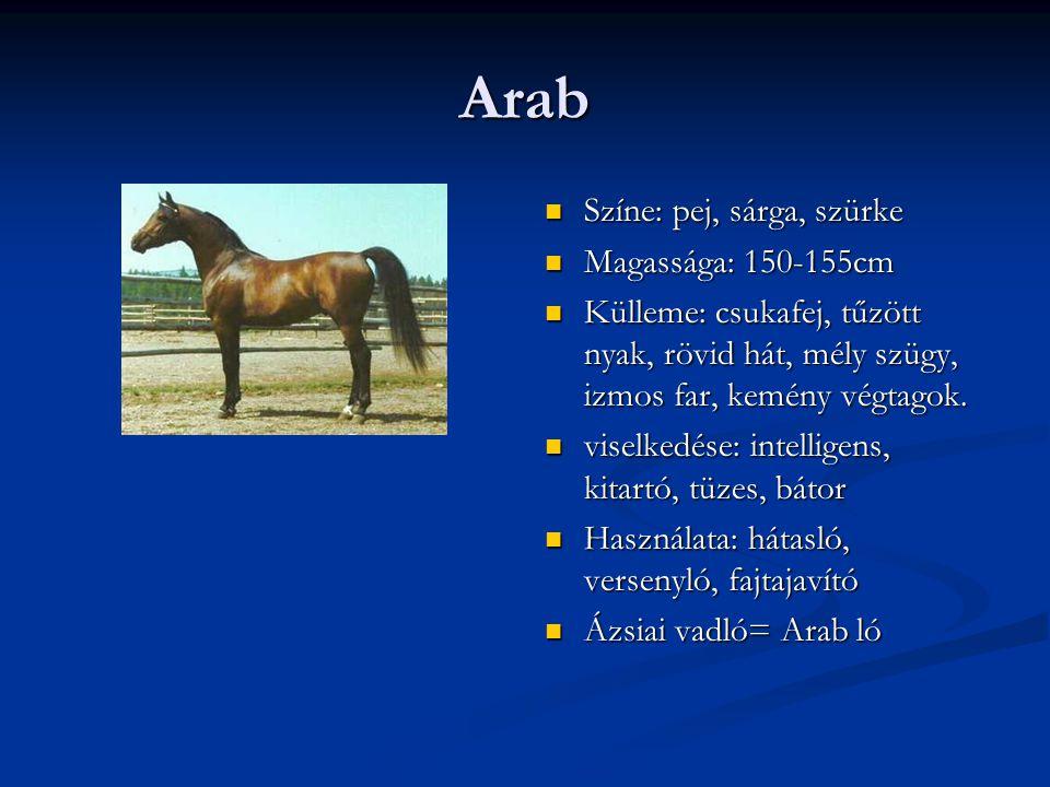 Arab Színe: pej, sárga, szürke Magassága: 150-155cm Külleme: csukafej, tűzött nyak, rövid hát, mély szügy, izmos far, kemény végtagok.
