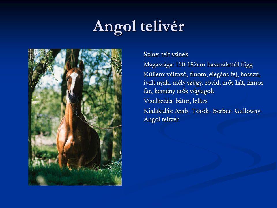 Angol telivér Színe: telt színek Magassága: 150-182cm használattól függ Küllem: változó, finom, elegáns fej, hosszú, ívelt nyak, mély szügy, rövid, erős hát, izmos far, kemény erős végtagok Viselkedés: bátor, lelkes Kialakulás: Arab- Török- Berber- Galloway- Angol telivér