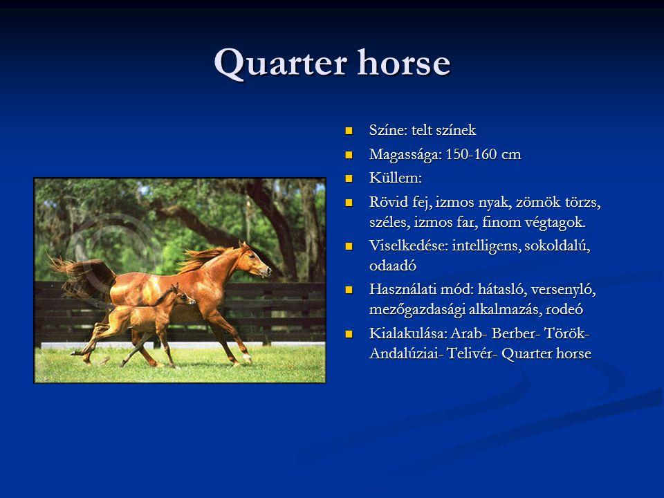 Quarter horse Színe: telt színek Magassága: 150-160 cm Küllem: Rövid fej, izmos nyak, zömök törzs, széles, izmos far, finom végtagok.