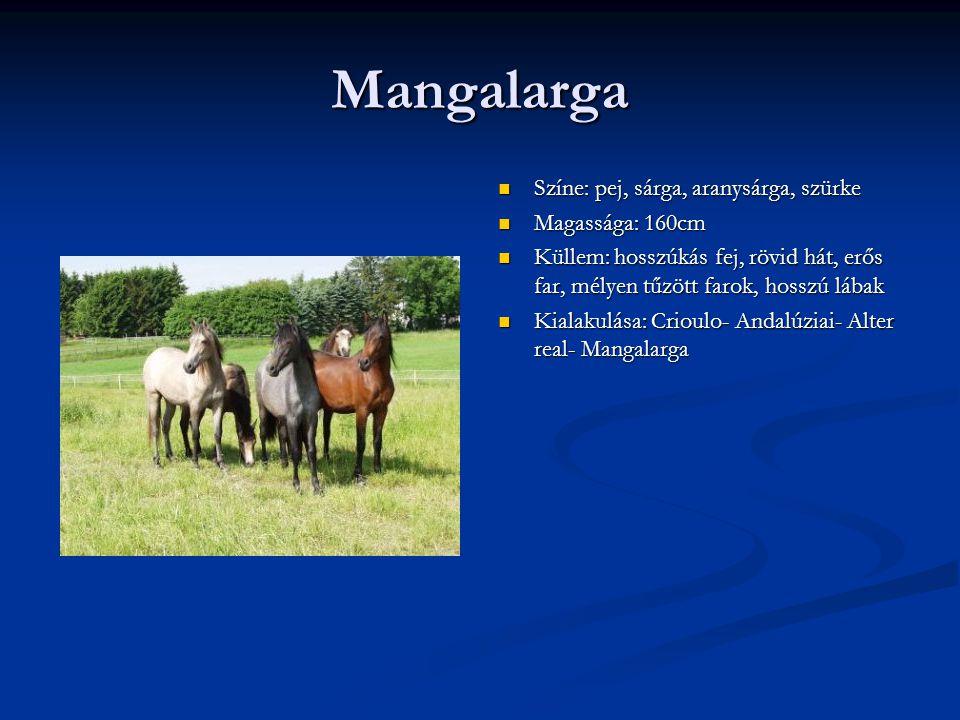 Mangalarga Színe: pej, sárga, aranysárga, szürke Magassága: 160cm Küllem: hosszúkás fej, rövid hát, erős far, mélyen tűzött farok, hosszú lábak Kialakulása: Crioulo- Andalúziai- Alter real- Mangalarga