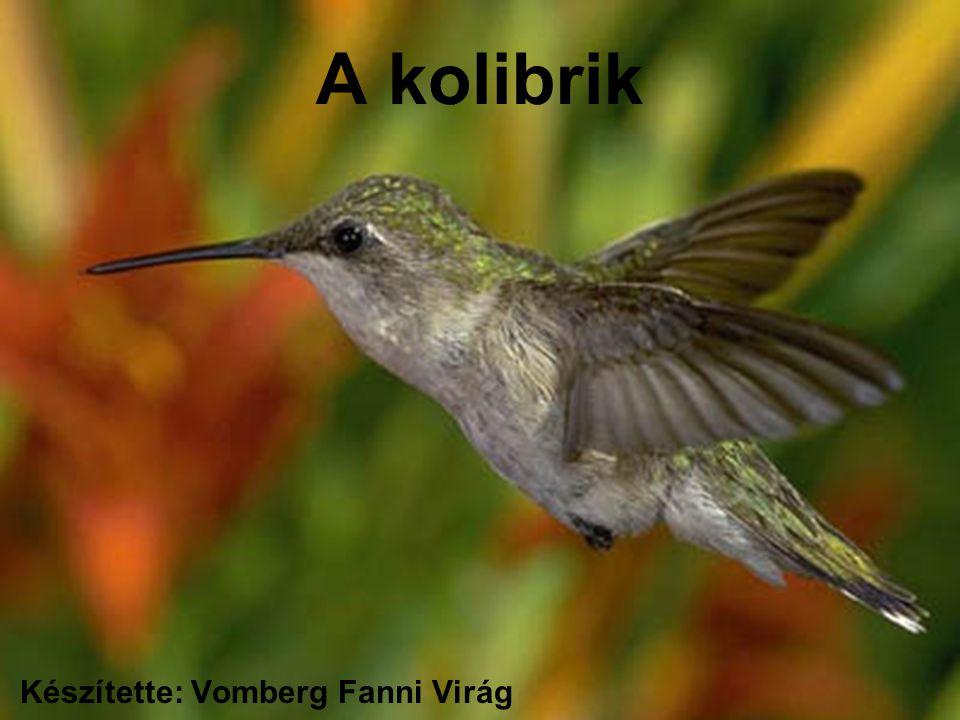 A kolibrik Készítette: Vomberg Fanni Virág